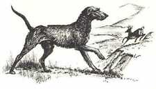 Scottish Deerhound - 1964 Dog Art Print - Matted