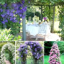 100Pcs/Bag Clematis Seeds Outdoor Climbing Plants Garden Park Plants Decoration