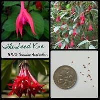 20+ RED BOLIVIAN FUCHSIA (Fuchsia Boliviana) Evergreen Shrub Bush Red Flower