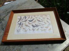 Nice Vintage RSPB Swallows Printed Original Frames Pictures Old 33.5cm x 45cm 2