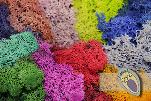 Preserved Filtered Reindeer Moss - multiple colours and pack sizes