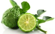 Kaffir lime, Leech lime Seeds Vegetables 1 Pack Product of Thailand