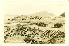 Pecos, TX 1944 Cattle Ranch Scene in West Texas RPPC