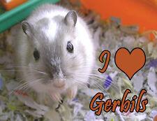 Gerbils Fridge Magnet - Wildlife
