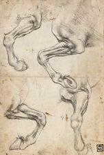 Studies of Horses Leg Leonardo da Vinci Pferd Fuß Hufe Bein Anatomie B A3 02785