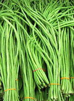 Snake Bean Long - Light Green - Yardlong bean, Borboti,  Bora, Chinese Long Bean
