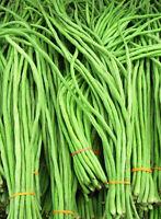 Snake Bean Long - Light Green - Yardlong bean, Borboti,  Bora, Chinese Long Bean