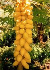 20pcs/Bag True Dwarf Organic Sweet Papaya Seed Bonsai  Edible Fruit Plant Sweet