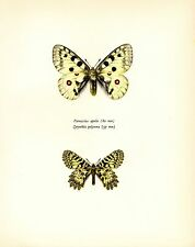"1963 Vintage PROCHAZKA BUTTERFLY ""APOLLO & SMALL THAIS"" COLOR offset Lithograph"