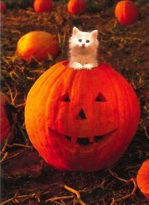 Avanti funny greeting card Halloween cat kitten pumpkin humorous