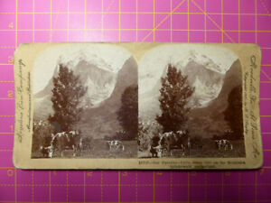 Antique Stereoscope Photograph - Swiss Girl on Mountain Grindelwald, Switzerland