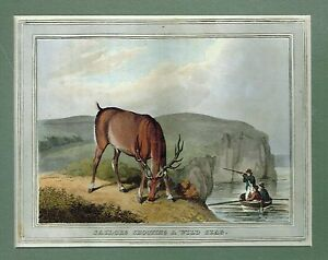 "Hunting Print - ""SAILORS SHOOTING A WILD STAG"" - Hand-Colored Engraving - 1813"