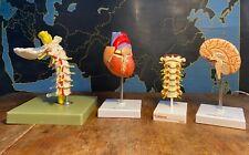 More details for 4  vintage medical scientific model of human brain heart spine & spinal chord