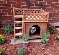 Two Story Cat or Dog Cabin Bed House Raised Inside Outside Wood Small Stairs New