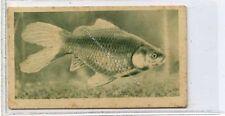 (Ga6342-100) Teofani, Aquarium Studies, London Zoo, #7 Comet Gold-fish 1925 G-VG