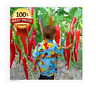 200pc+Home Garden Rare Giant Spices Red Spicy Chili Pepper Seeds Vegetable Plant