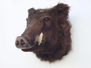 WILD BOAR HEAD life size