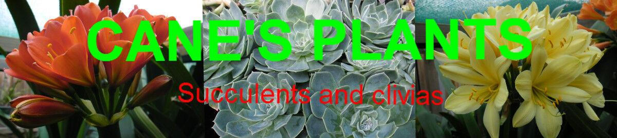 Canes Plants