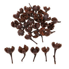 50 Stück Lose in Masse natürliche getrocknete Blumen Nussschale