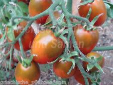 Tomate BLACK TRUFFLE schwarz blau*10 Samen Feinschmecker Tomaten tolles Geschenk