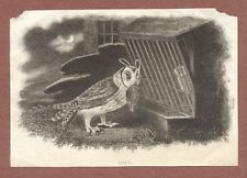 Owl with game bird,  Engraving Victorian era,  Moonlight,  cage    RK1048