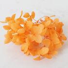1g Hydrangea Dried Flower DIY Aromatherapy Candle Epoxy Filling Jewelry Craft