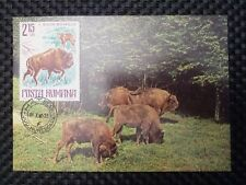 ROMANIA MK ANIMALS BISON WISENT MAXIMUMKARTE CARTE MAXIMUM CARD MC CM a9806