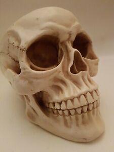 Resin Cast Life Like Skull Model