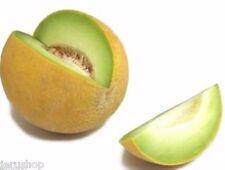 150 fresh Seeds Israeli Ogen Sweet Melon Honey Cucurbitaceae cucumis melo מלון