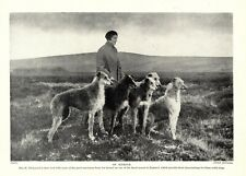 1930s Antique Deerhound Dog Print Richmond Deerhounds on Exmoor Print 3527-D