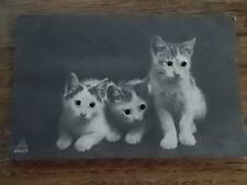c1920s 3 x CAT Kittens Postcard Cats have real Eyes in 3D Written on unposted
