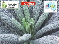 KALE BLACK MAGIC SEEDS - AUSSIE ORGANIC CERTIFIED - BRASSICA OLERACEA
