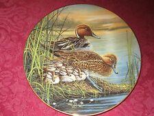 PINTAIL DUCK collector plate BRUCE LANGTON Bradford Exchange WATER BIRDS Ducks
