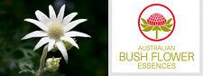 FIORI AUSTRALIANI Flannel Flower REPULSIONE CONTATTO FISICO/Sensibilità Piacere