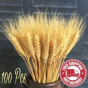 100PCS STEMS DRIED WHEAT/RYE BUNCH WEDDING FLOWERS ARRANGEMENT NATURAL BOUQUET