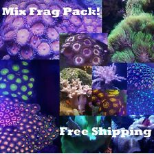 Softy Frag pack 5 mix Corals Colorful leathers polyps mushrooms live reef Salt