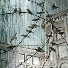 18 x 18 Accent Decor Ceramic Birds Mural Backsplash Bath Tile #815