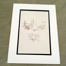 Antique Anatomical Print Human Anatomy Hyoid bone Neck Skull Medical Diagram