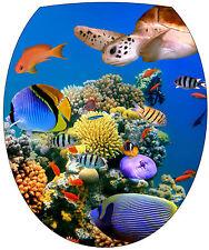 Sticker abattant de WC Tortue poissons 35x42cm Réf 2146