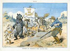 THEODORE ROOSEVELT NEXT HUNTING TRIP BEAR MOOSE SHEEP ANTELOPE FOX RABBIT WOLF