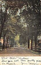 Stamford CT Tall Trees (Most Now Gone!) in Front of Clinton Ave Homes 1906 UDB