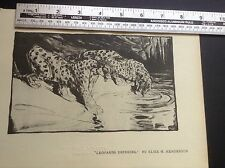 1920s Lithographic print Leopards Drinking by Elsie M Henderson