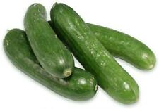 Lebanese Cucumber 30 Seeds Open Pollinated Organic & Delicious