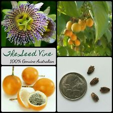 10+ SWEET GRANADILLA SEEDS (Passiflora ligularis) Passionfruit Edible Flower