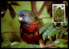 ST. LUCIA MK VÖGEL PARROT BLAUSTIRNAMAZONE MAXIMUMKARTE MAXIMUM CARD MC CM /m875