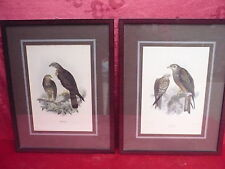 2 Beautiful, Old Pictures __ Birds of Prey __ Framed, behind Glass ___