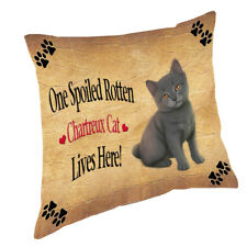 Chartreux Kitten Spoiled Rotten Cat Throw Pillow 14x14