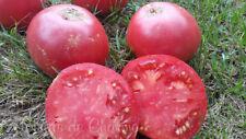 10 graines de tomate rare ROSA di SORRENTO très charnue superbe saveur méth.bio