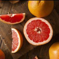 Ruby Grapefruit Grafted Tree ( Citrus paradisii )