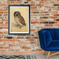 Albrecht Durer - The Little Owl Wall Art Poster Print